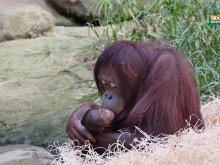 Dinda mit ihrem Baby