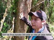 Varför räddar vi regnskog på andra sidan jorden? Pella Larsdotter Thiel från svenska Rädda Regnskog på 3000 meters höjd.