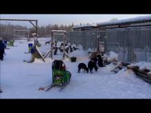 AMONDO Exklusiv: Lapplandreise 2017