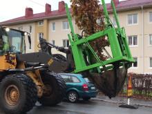 Trädflytt av Poseidon på Zachrissonsgatan i Göteborg