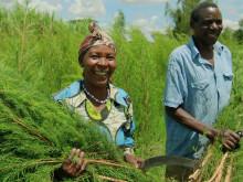 Vores Tea Tree serie indeholder 100% Økologisk Community Trade olie fra Mount Kenya