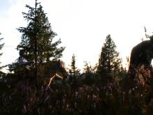 Trysil søker små og store testpiloter til naturens fornøyelsespark