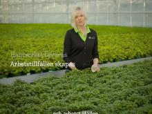 Gröna växter odlade i Sverige 1x1