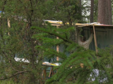Petri Hytönen, Forest Painter, 2017.  Film av Timo Heinänen