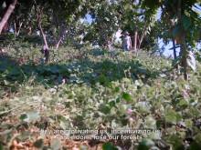Klimatsmart kaffe och kakao i Perus regnskog