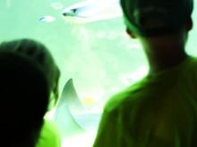 Barnpatrullen besöker Aquarias havsakvarium