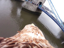 Vídeo vuelo águila