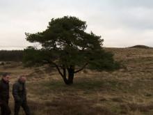 Økologiske lam i MENY