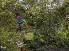 Smart trädgårdstips: Så blir du snabbt av med ogräset!