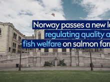 50 years of salmon farming