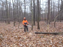 Henrik Larsen igang med at fælde træ