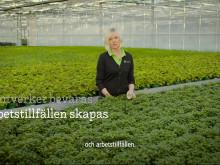 Gröna växter odlade i Sverige 6x9