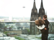Adlerflug über Köln von Sony und FREEDOM