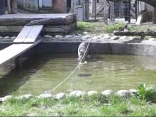 Parken Zoos nya katt fiskar