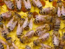 Vores honning kommer fra vilde bier i Etiopiens regnskov