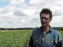 Estrellas ekobonde om utsikterna för den ekologiska potatisen som nu börjat växa till sig.