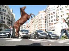 Behind the scenes: V75 – Har du alla hästar hemma