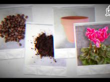 Plantera höstkruka