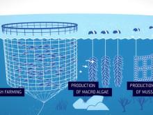 Ocean Forest - Bærekraftig havbruk