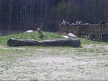 Nya utmaningar för geparderna i Parken Zoo