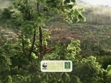 Keep the Heart of Borneo Beating