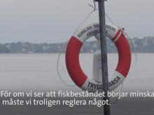 Sälar, fåglar och människor konkurrerar om Östersjöns fisk