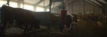 Arlabönder går före och sätter ny standard för djuromsorg