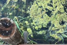 Havs- och vattenmyndigheten fördelar ytterligare medel till arbete för minskad övergödning