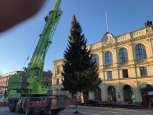 Nu kommer julgranen till Stora torget upp