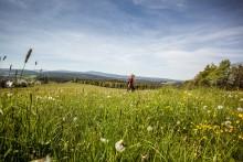Frühjahrs-Wanderwoche im Erzgebirge
