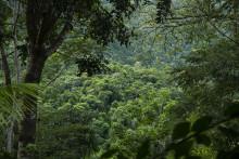 Brølende kærlighed til naturen