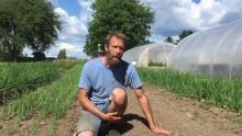 Ja til flere småskala økologiske grønnsaksdyrkere