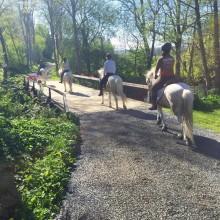 Föreningen Hästrundan samlar aktörer inom hästnäringen