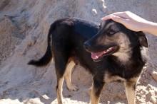 Stickprovskontroller av importerade gatuhundar införs