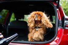 Ford Pumas nye MegaBox bliver til hundespa