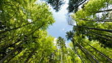 FN:s globala hållbarhetsmål: Endast en av tre kommuner har en plan
