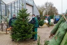 Weihnachtsbaumverkauf in der Hephata-Gärtnerei gestartet