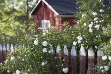 För sommarstugor gäller köparens marknad i hela Finland