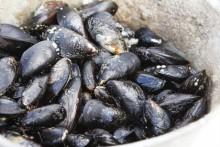 Satsningar på vattenbruk, småskaligt fiske och miljö i förslag för nästa programperiod