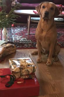 Leksaker är årets julklapp bland hundar - men upplevelser kvalar in på topplistan