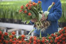 Utmärkta växter odlade i Sverige
