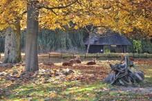Herbstferien im Zoo Rostock