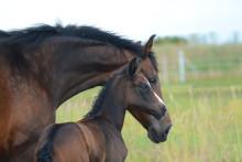 Hästarna får ännu bättre villkor hos Sveland Djurförsäkringar