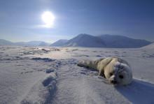 Bilder från expedition på Arktis med Brutus Östling, Fredrik Granath och Honda elverk EU10i