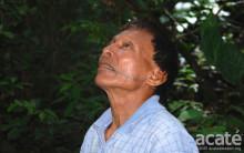 Den helbredende skov: Shamaner fra Amazonas nedskriver viden om skovens medicin.