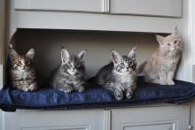 Hur fungerar en kattförsäkring?