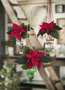 Trendbrott för försäljning av julstjärnor