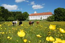 Stor donation til Ørslev Kloster