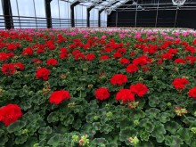 Vi vill leverera blommor med hjärta, själ och kärlek
