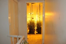 Woman arrested and cannabis farm and drugs recovered following warrant in Wavertree